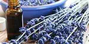 Verwenden Sie Lavendel: Lavendel Tee, getrocknete Lavendel und mehr