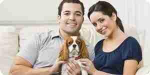 Die Wahl eines Dog nach einer Wohnung: Wählen Sie eine Hunderasse