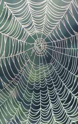 Wie erstelle ich ein Draht-Spinnennetz