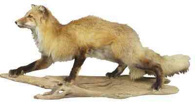 Wie man einen Fox-Schwanz Von Garn