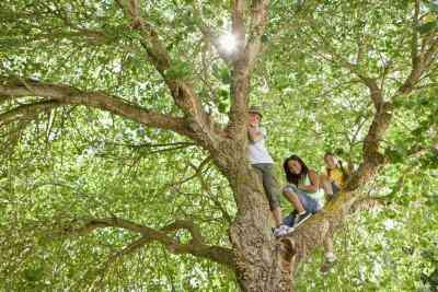 Wie erstelle ich einen lebensechten dimensionalen Baum an der Wand