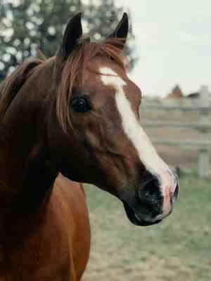 Wie man ein Pferd Aus Socken