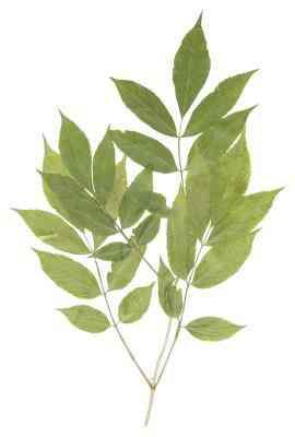 Wie zu Kleben Blätter