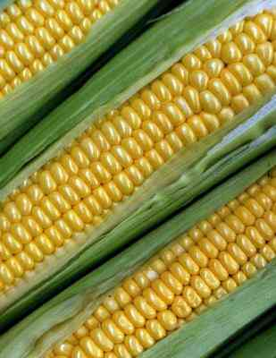 Corn-Cob-Crafts