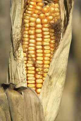 Wie erstelle ich Mais Schale Körbe