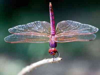 Wie man ein 3D Dragonfly