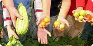 Gartenarbeit in Kindergarten und erste Klasse Lehrplan integrieren