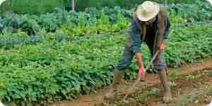 Machen Sie Bio Gemüse Pflanzen essen