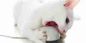 Stoppen eine Katze beim beißen: Katze und Kätzchen-training