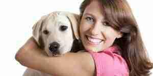 Pflege für Labrador Retriever Hunde und Welpen