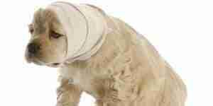 Hund-Anfälle zu behandeln: Hunde-Betreuung und Information