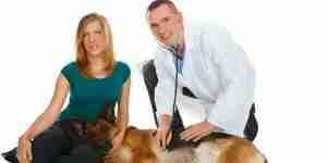 Anzeichen und Symptome der diabetischen Hunde