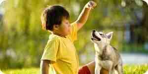 Einen Welpen sozialisieren: Hunde-Verhalten Trainingstipps