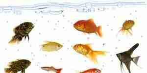 Kaufen Süßwasserfisch